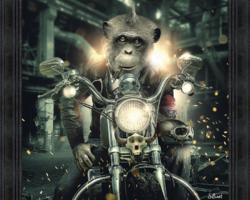 GORILLE MOTO